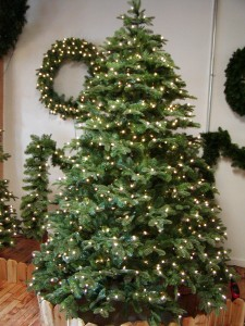 Noble Fir Tree 7.5' Clear