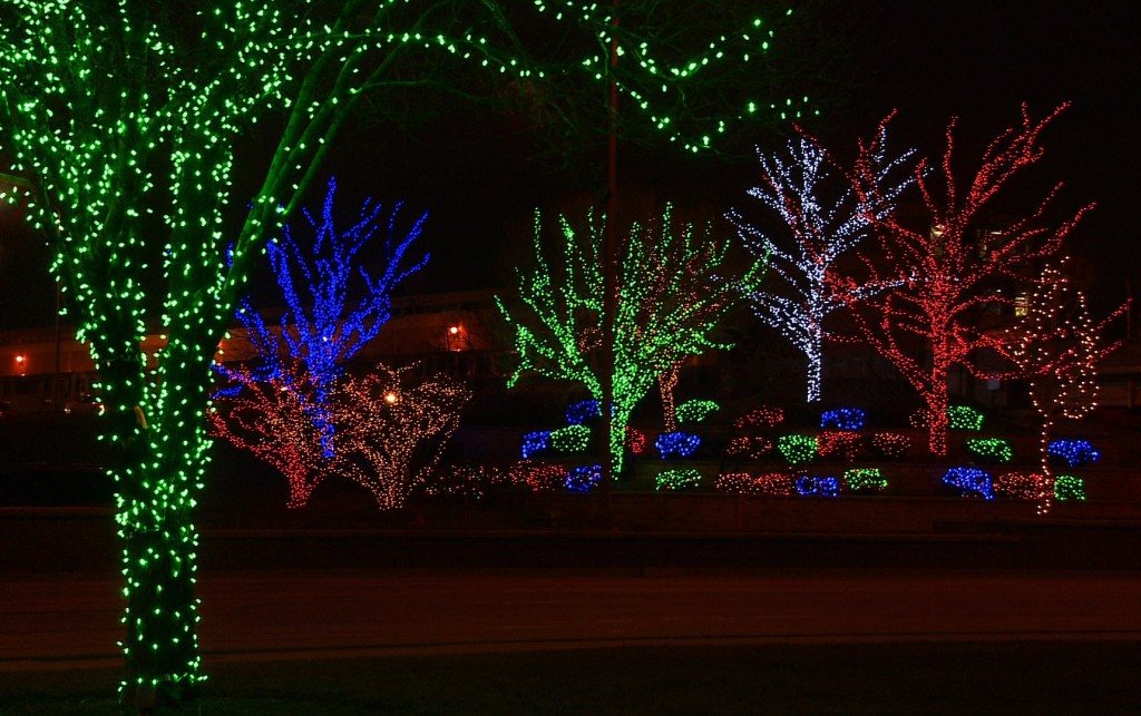 Tree Wrapping with LED Light Sets