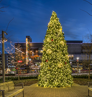 commercial outdoor christmas tree